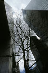 New-York City - Low angle view of buildings and tree